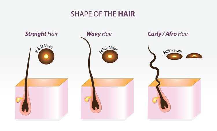 Shape of your hair